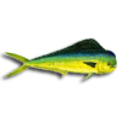 Durado Fish Prism